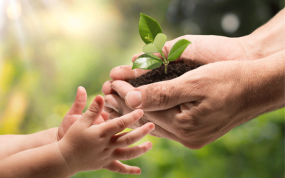 image of adult hands handing seedling to younger hands